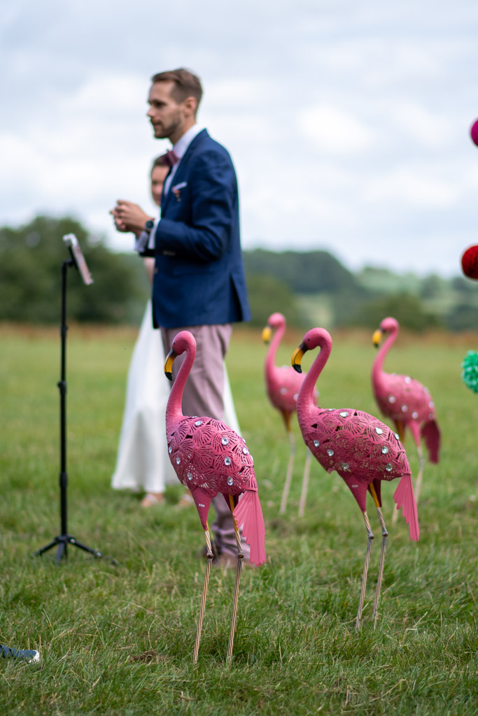 A flock of flamingos watching over the wedding ceremony